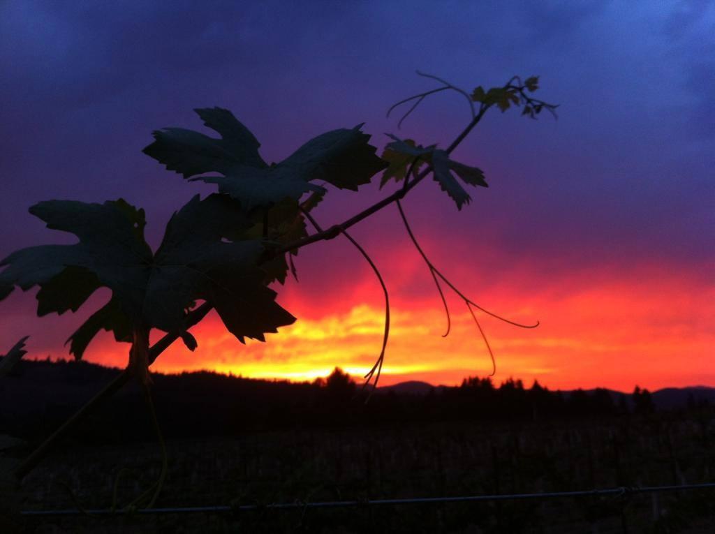 vine-sunset-behind